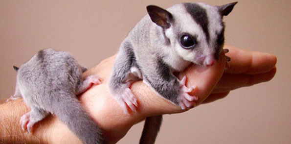 Our Top 10 Most Exotic Pets Species You Can Legally Keep Now
